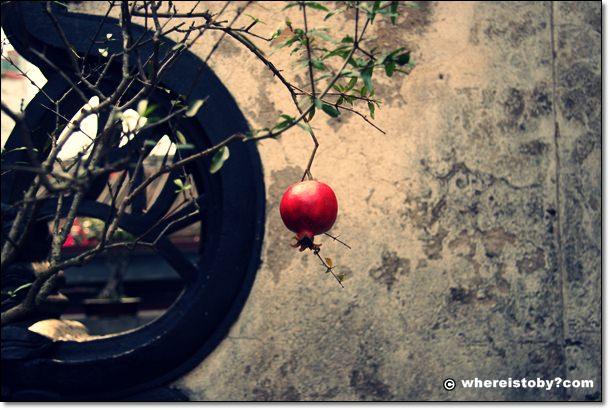 點絳唇之倚遍欄干,只是無情緒~林家花園