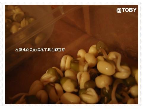 景氣壞,自種豆芽菜必勝!來盤豆芽上樹。